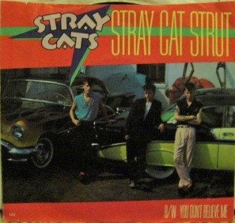 stray cat US