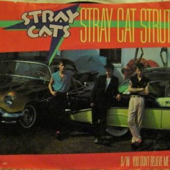 stray cat US